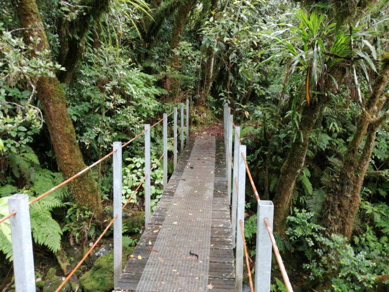 Randonnée à la Réunion - Promenade à la Plaine des palmistes