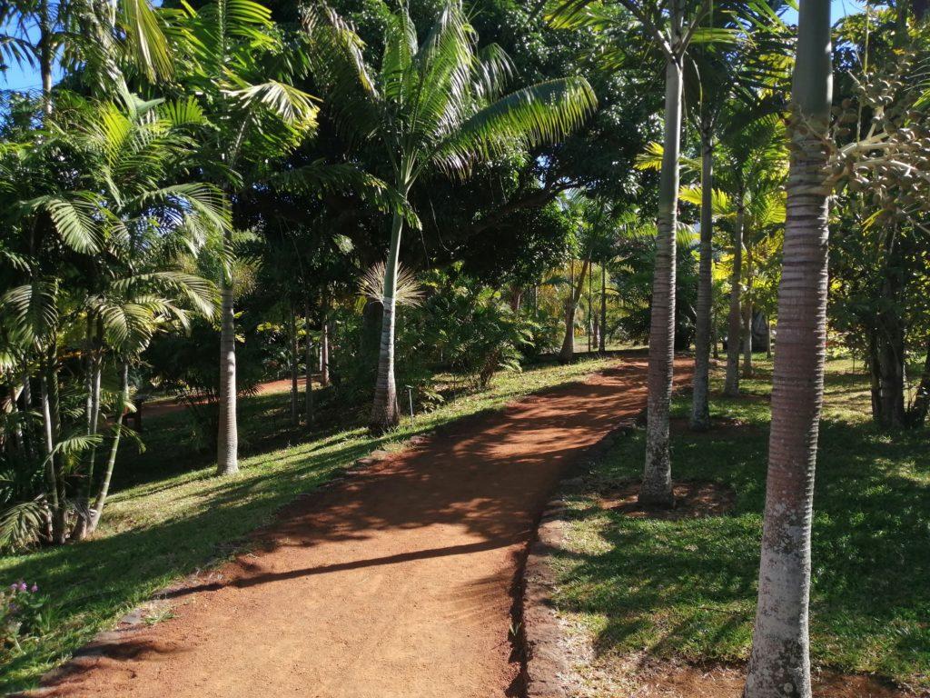Chemin parc des palmiers