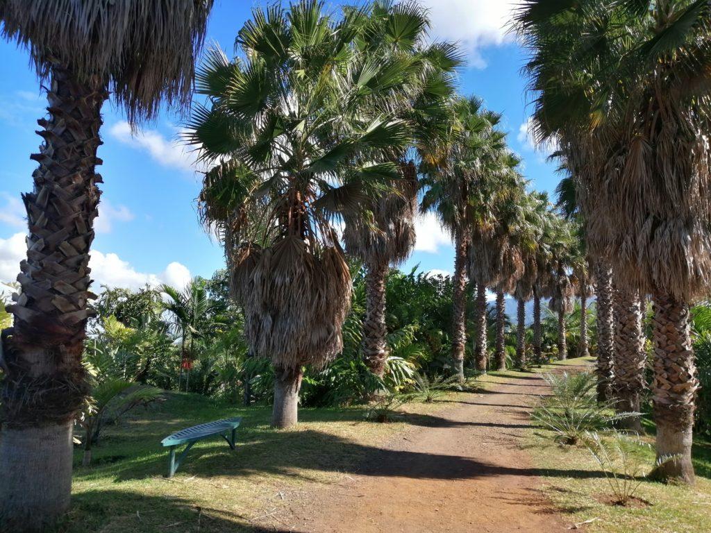 Allée parc des palmiers au tampon