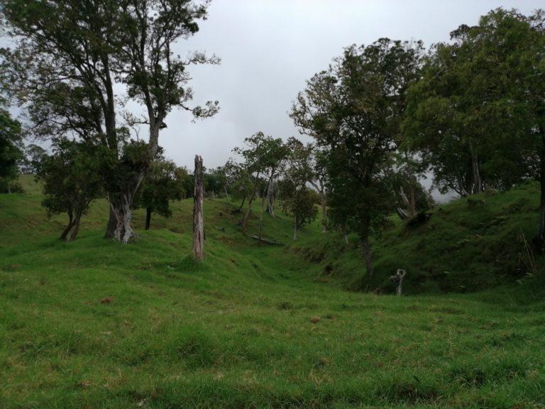 Prairie bois de nefles