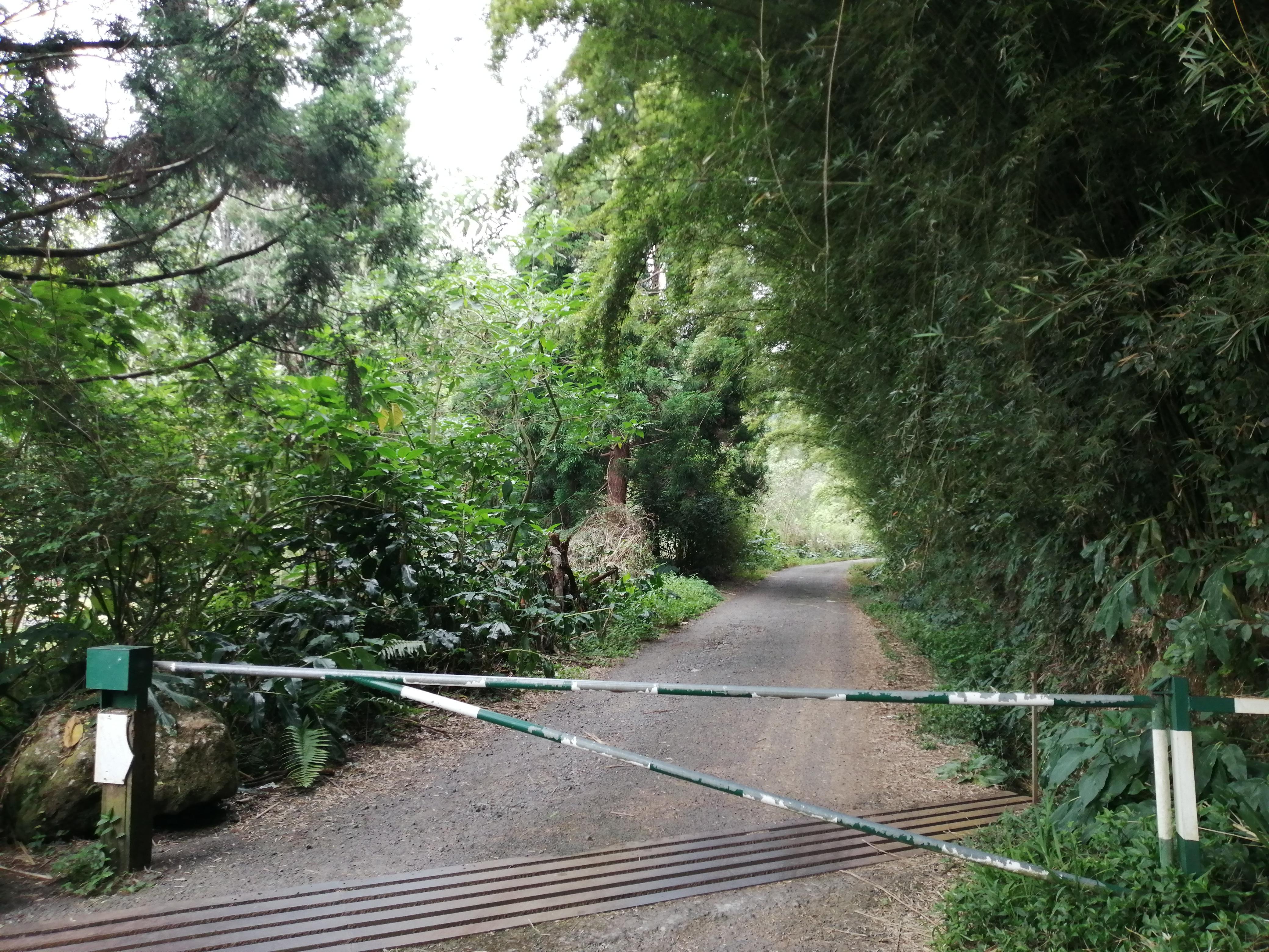 Début de la route forestière des goyaviers près de l'observatoire des makes