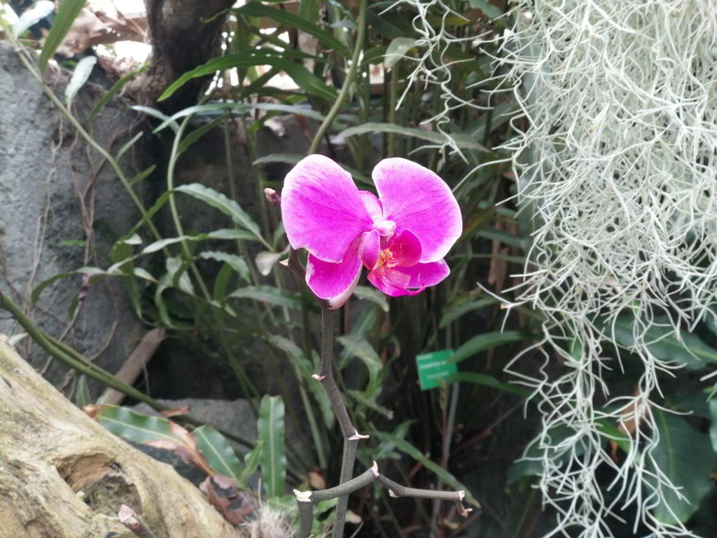 Orchidée au jardin botanique de Mascarin au Domaine des Colimacons à st leu