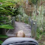 Jardin Botanique Mascarin Saint Leu