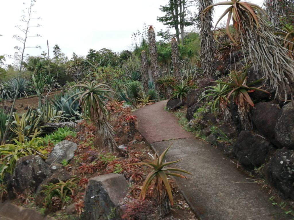 Collection succulentes au jardin botanique de Saint Leu