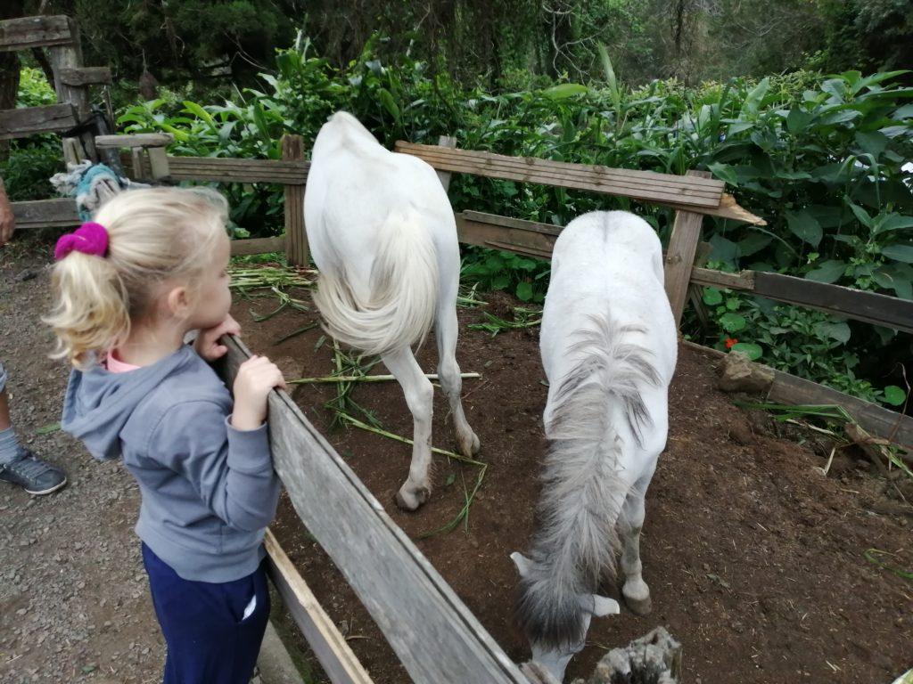 Les poneys au parc de la luge au maido