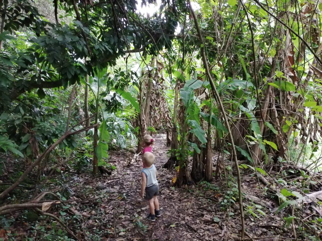 Passage à coté des bananiers Bassin Sassa