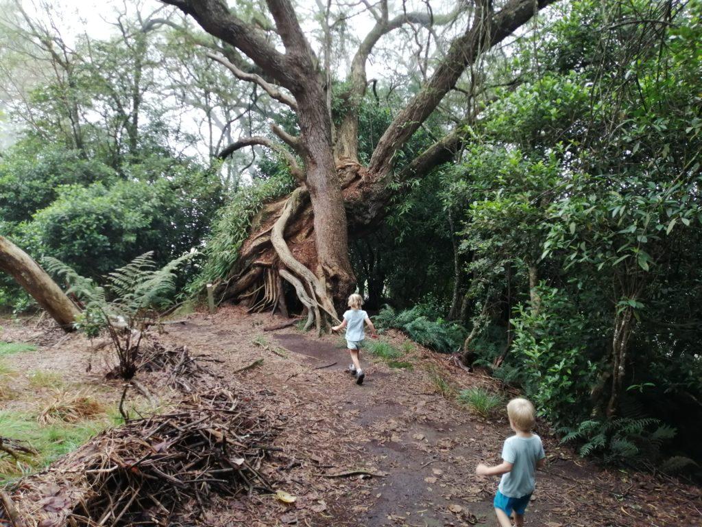 Les enfants au sentier botanique de la Ravine Blanche