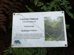 Pancarte Fanjan Femme - Plante de la Réunion
