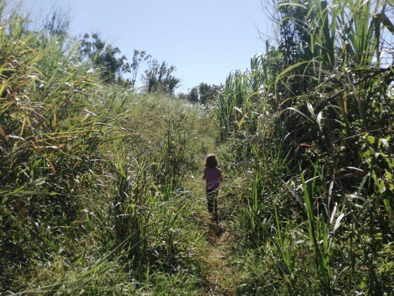 Cascade pichon, accès par les herbes hautes