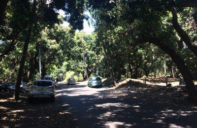 La voiture sous les manguiers